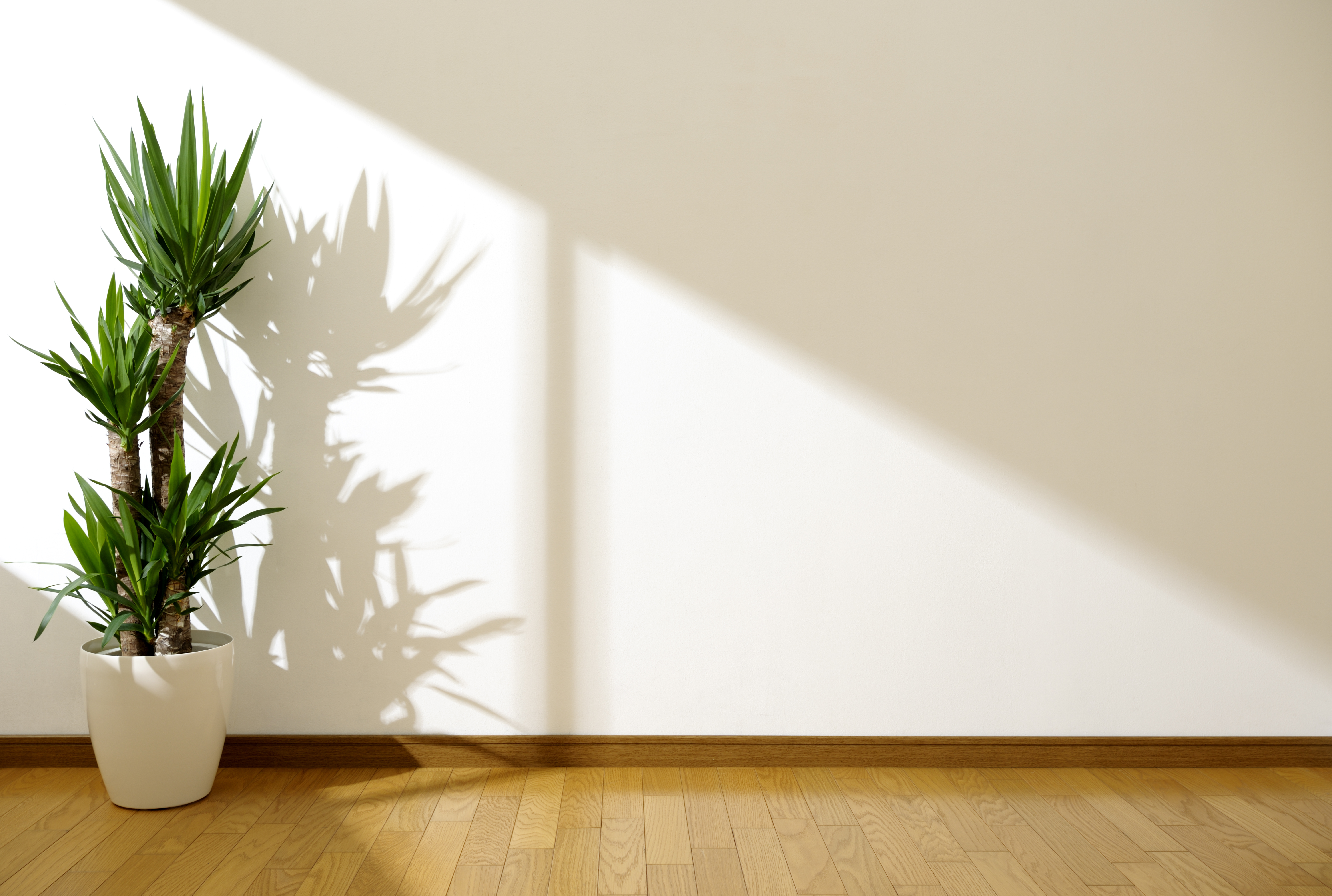 Natural Light in Your Home - KLG Glass